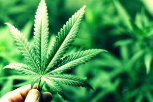 """Galeno de Pérgamo ya advirtió de que la marihuana """"seca el esperma�"""