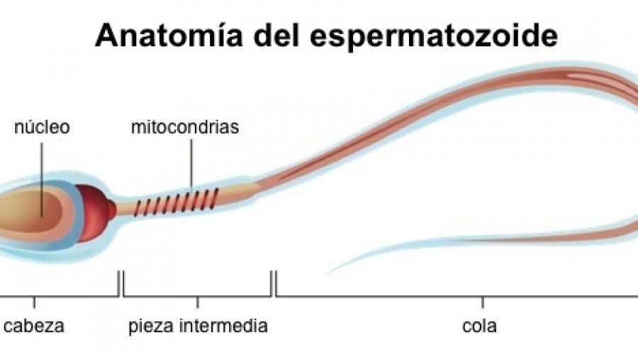 Cómo interpretar un espermiograma