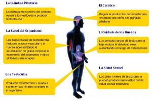 efectos de la testosterona