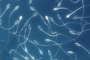 tejido testicular