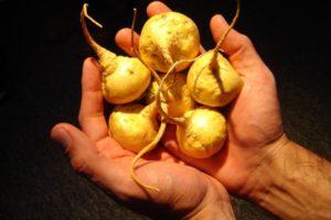 Los beneficios de la maca andina para la salud del hombre